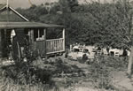 1948 - Just moved down from the House to the Brook.